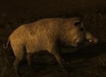 Кабан – Boar