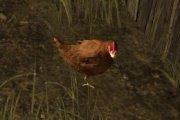 Курица – Chicken